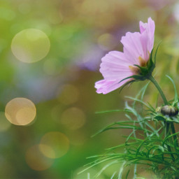 photography photooftheday flower nature bokeh depthoffield myphoto freetoedit