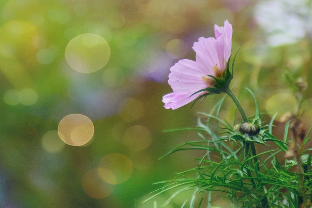 #photography #photooftheday #flower #nature #bokeh #depthoffield #myphoto  #freetoedit
