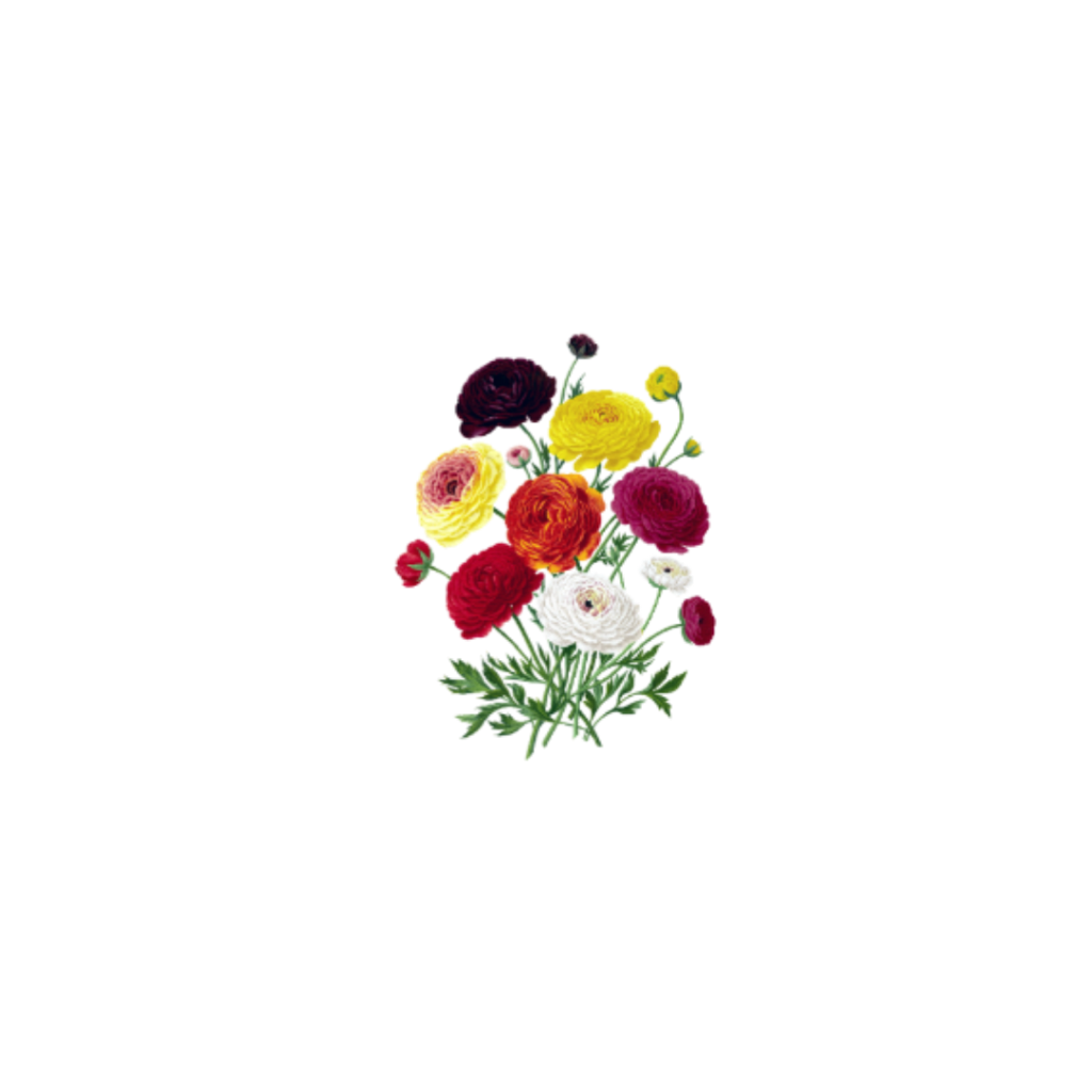 #flower #flowers #multicolor #nature