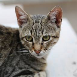 freetoedit catsofpicsart cat catsphotography catslover