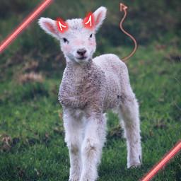 evil demon kawaii goat freetoedit
