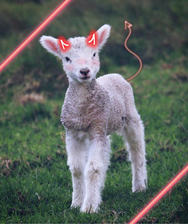 I love how this looks #evil #demon #kawaii #goat  #freetoedit