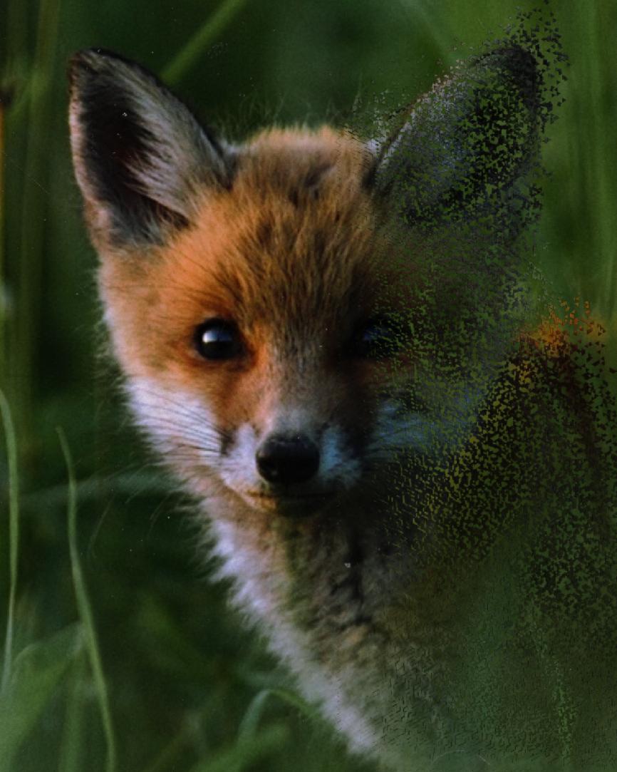 Animals are going extinct... #savetheanimals #savetheplanet #savetheearth #freetoedit