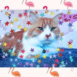 kittylover boy my