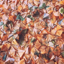 leaf leaves fall color fallcolors freetoedit