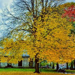 fall leaves autumn autumncolors autumnleaves freetoedit