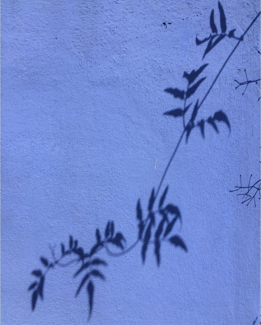 #housewall #bindweedbranch #shadow on the #wall #minimalism #urbannaturephotography                                           #freetoedit