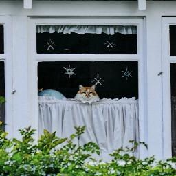 someoneinthewindow angeleyesimages window windows instagram