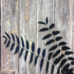 shadows leaves plant old woodendoor freetoedit