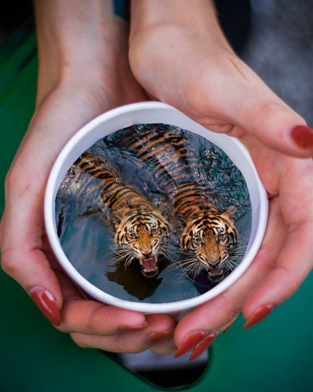 #freetoedit #cup #hands #coffeecup #tigers  #water