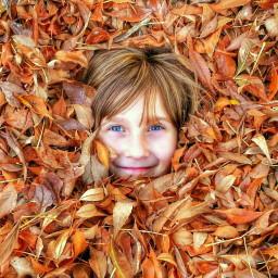 freetoedit fall autumn nature trees leaves
