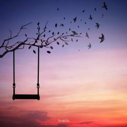freetoedit silhouette likes thankyou black peace lovesilhouette nature birds branch