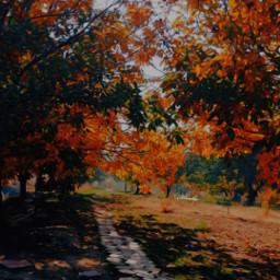 freetoedit atumn leaf orange yellow