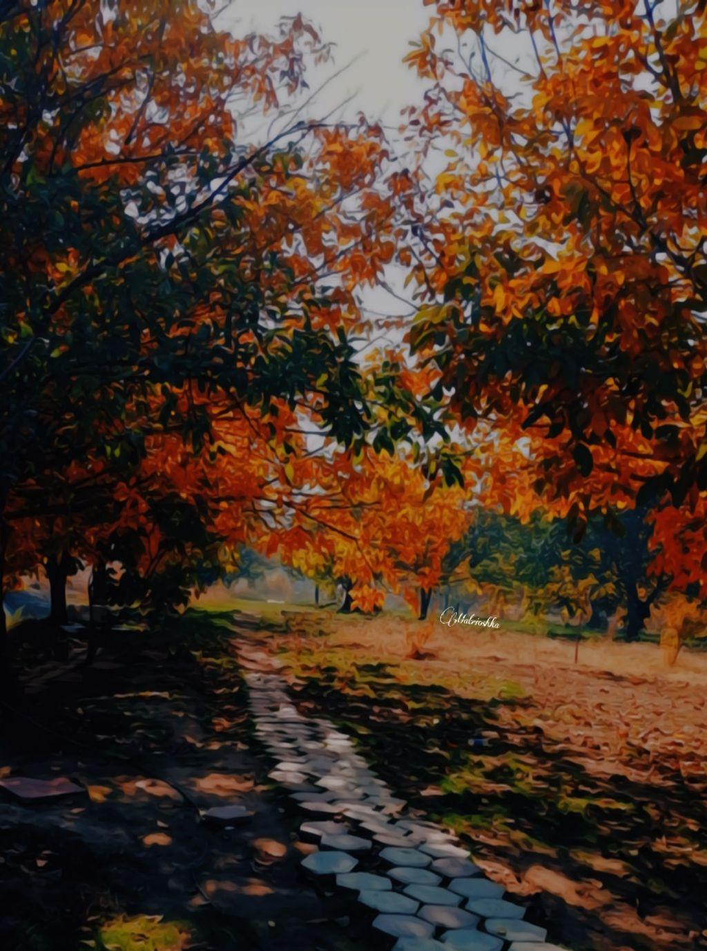 #freetoedit #atumn #leaf #orange #yellow #myclick📷