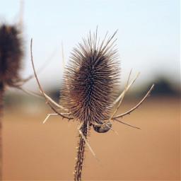 nature wildplants thistle driedflower snails freetoedit