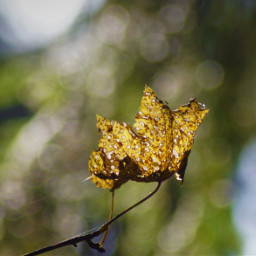 freetoedit leaf nature bokeh closeup