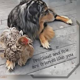 notfreetoedit animalfriends dog chicken freetoedit