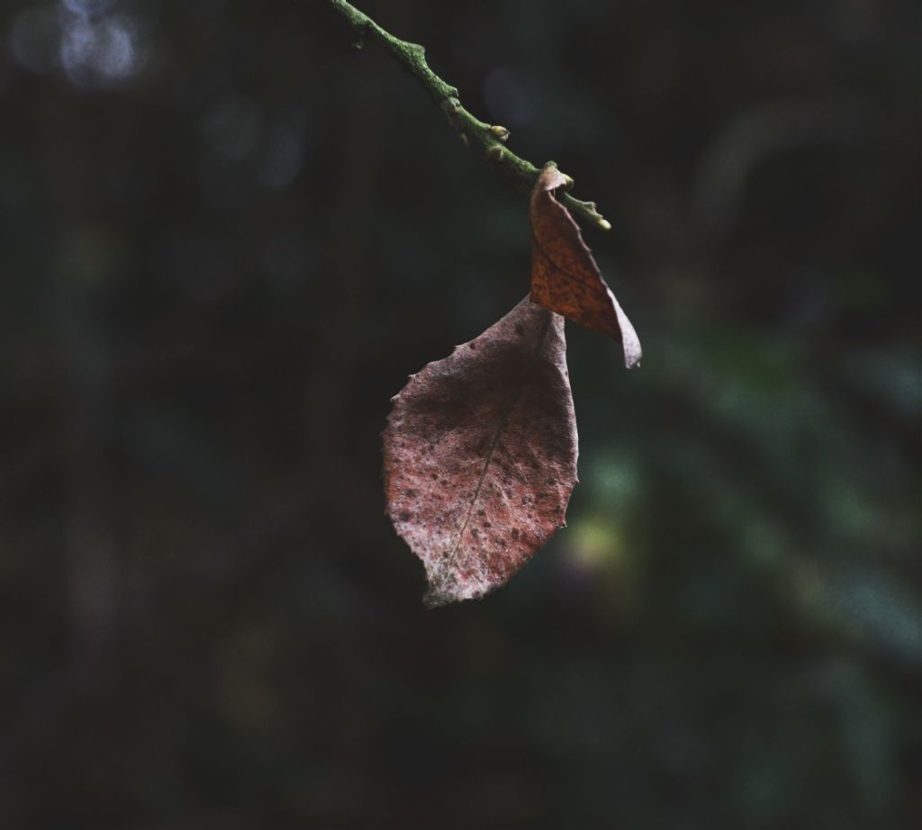 Just liked this last leaf #nature #leaf #loneleaf #closeup #dramaeffect  #freetoedit