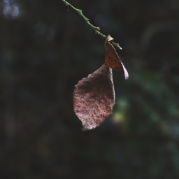 nature leaf loneleaf closeup dramaeffect freetoedit