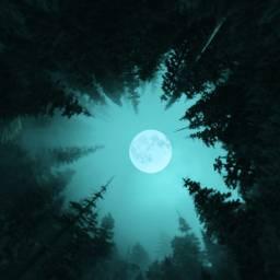 freetoedit tinyplaneteffect hueeffect moon pinetrees