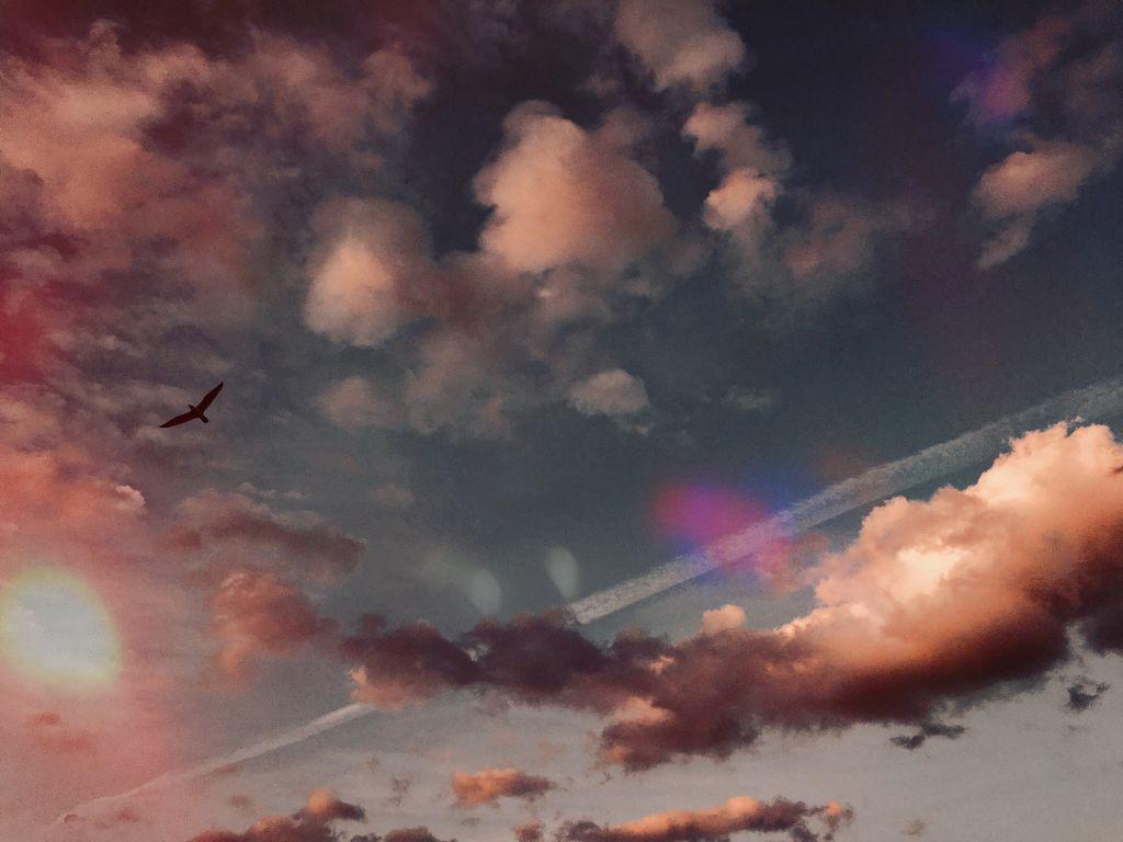 #madewithpicsart #sky #seagull #freedom