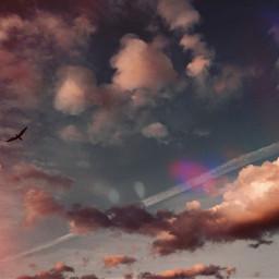 madewithpicsart sky seagull freedom