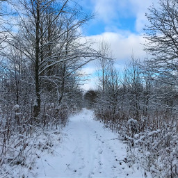 nature landscapephotography winterforest photography naturephotography freetoedit