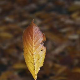 nature leaf loneleaf closeup colourful freetoedit