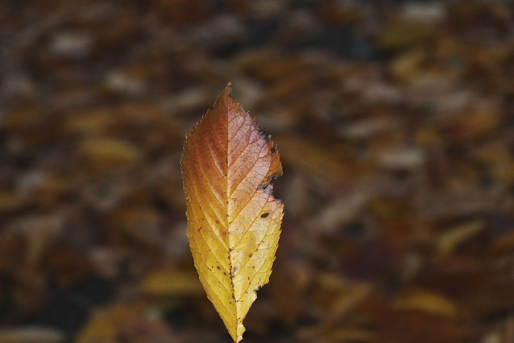 Just liked this leaf #nature #leaf #loneleaf #closeup #colourful  #freetoedit