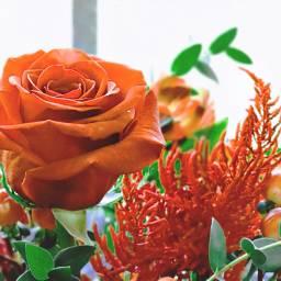 freetoedit flower rose redorange bouquet
