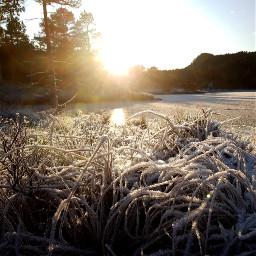 nature winter frosty sun