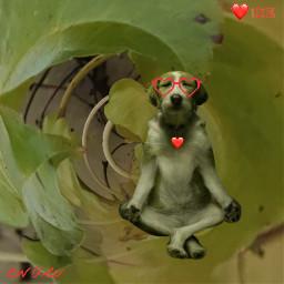 freetoedit chillout meditation dog green