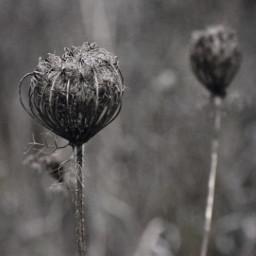 freetoedit naturephotography macro hellonovember coldday