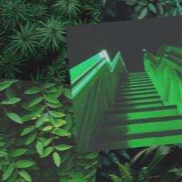 freetoedit green greenaesthetic dark darkgreen