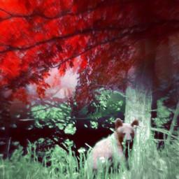 mylittlebrownbear fallcolors darkred freetoedit