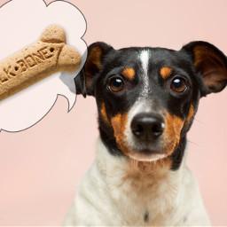 freetoedit dog pink bone speechbubble