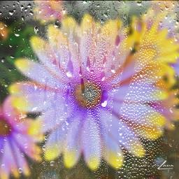 flores blur lluvia flowers rainyday ecrainyseason freetoedit