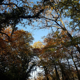 freetoedit photographytakenbyme blueskys trees roadside