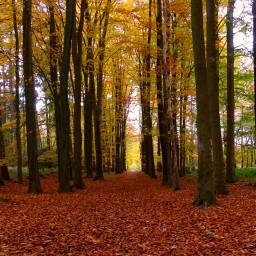 autumn autumnleaves adjusttools photography myphoto freetoedit