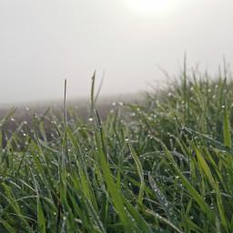 fog haze nature pcgloomyweather gloomyweather