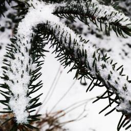 freetoedit snow cold weather coldweather pcgloomyweather gloomyweather