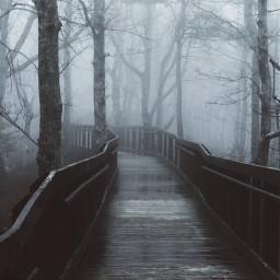 fog trees gloomy pcgloomyweather gloomyweather freetoedit