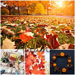 freetoedit ccautumnmoodboard autumnmoodboard
