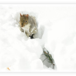 squirrel snow firstsnow white nature