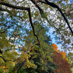 autumn naturephotography colorful trees