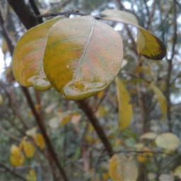 waterdrops rain leaf fall raindrops