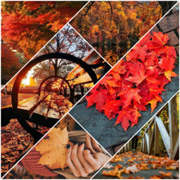 freetoedit колаж конкурс осень осенние ccautumnmoodboard autumnmoodboard