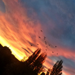 freetoedit photography myphotography sunrise horizon