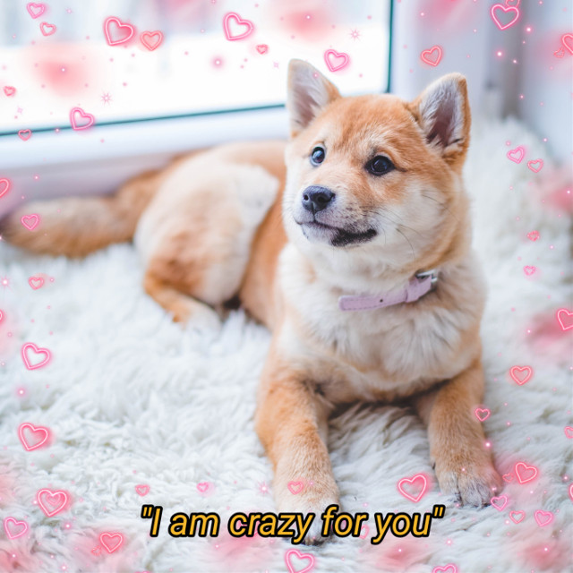 #freetoedit #puppy #dog #love