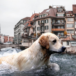 freetoedit city dog animals swimming